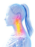 Female upper spine Royalty Free Stock Photo