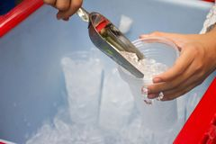 Female use metal ice scoop and plastic cup in ice bucket.  stock photo