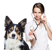 Female vet with a beautiful dog Stock Images