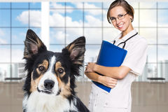 Female vet with a beautiful dog Stock Photos