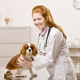 Female vet cares for dog royalty free stock photos