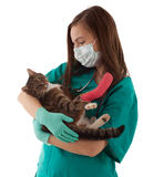 Female vet with cat in surgery Royalty Free Stock Photography