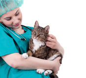 Female vet with cat in surgery Royalty Free Stock Photos
