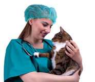 Female vet with cat in surgery Stock Photos