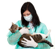Female vet with cat in surgery Royalty Free Stock Photo