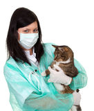 Female vet with cat in surgery Stock Images