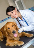 Doctor checking a dog Stock Photography