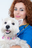 Female vet with dog Royalty Free Stock Image