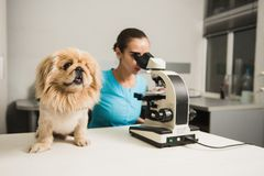Female vet with dog and microscope Stock Photography