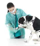 Female vet with dog in surgery Stock Images