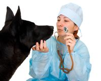 Female vet dog treats Stock Photo
