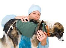 Female vet dog treats Stock Photography