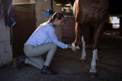 Female vet examining horse leg in stable Royalty Free Stock Images