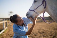 Female vet examining horse mouth Stock Photography