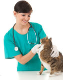 Female vet in green protective uniform with cat in Stock Images