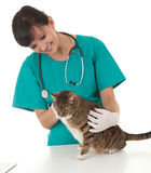 Female vet in green protective uniform with cat in Stock Photos