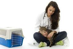 Female vet with grey cat Royalty Free Stock Images