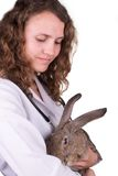 A female vet holding a rabbit Royalty Free Stock Photo