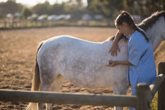 Female vet injecting horse at barn. Side view of female vet injecting horse at barn royalty free stock image