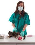 Female vet in medical mask with cat in surgery Stock Photos