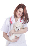 Female vet with poodle puppy Stock Images
