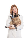 Female vet with a Siamese cat Stock Photo