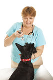 Female Veterinarian Royalty Free Stock Photos