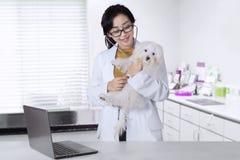 Female veterinarian checks a maltese dog. Beautiful female veterinarian checks a maltese dog using a stethoscope in the hospital stock image