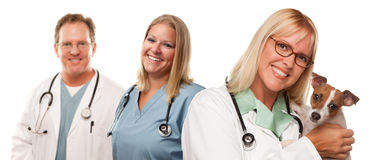 Female Veterinarian Doctors with Small Puppy Royalty Free Stock Photos