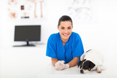 Female veterinarian dog Royalty Free Stock Photo