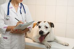Female veterinarian with dog at vet clinic.  stock photo