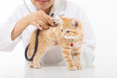 Female Veterinarian doing checkup a cute cat at clinic Royalty Free Stock Photography