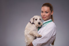 Female veterinarian examines little dog Royalty Free Stock Photos