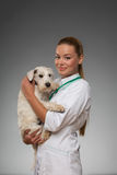 Female veterinarian examines little dog Stock Photo