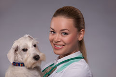Female veterinarian examines little dog Stock Photos