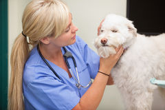 Female veterinarian examining dog Stock Photo
