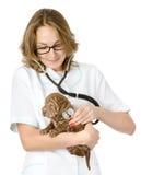 Female veterinarian examining a sharpei puppy dog. Royalty Free Stock Photography