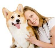Female veterinarian and Pembroke Welsh Corgi dog. Looking at cam stock photos