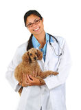 Female Veterinarian with Poodle Stock Photography