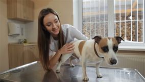 Female veterinarian prepares to check up the dog stock footage