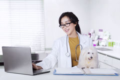 Female veterinarian with puppy in clinic. Beautiful young veterinarian using a laptop on the table with puppy in the clinic Stock Photo