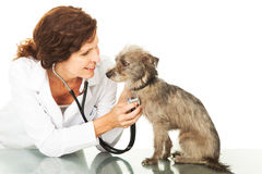 Female Veterinarian With Small Dog On Table Stock Photo