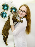Female veterinarian with tabby cat in vet office.  royalty free stock photography
