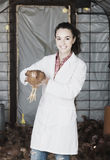 Female veterinarian in white coat holding brown chicken in hands Royalty Free Stock Images