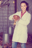 Female veterinarian in white coat holding brown chicken in hands Stock Image