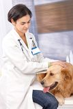 Female veterinary surgeon examining dog Stock Photo