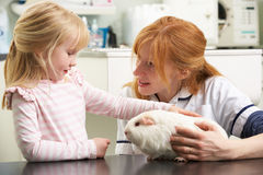 Female Veterinary Surgeon Examining Guinea Pig. Female Veterinary Surgeon Examining Childs Guinea Pig In Surgery Stock Photography