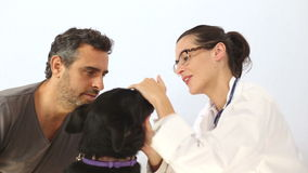 Female vetrinarin performing dogs medical checkup stock video footage