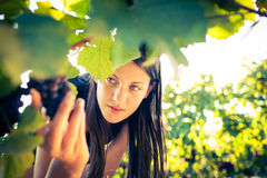 Female vintner Royalty Free Stock Photos