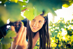 Female vintner Royalty Free Stock Images